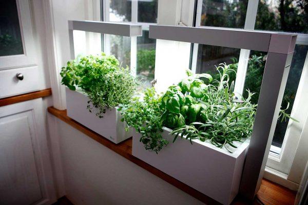 Herbal Indoor Greenhouse