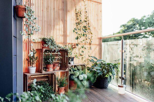 plants for balcony